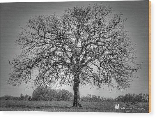 Old Oak Wood Print