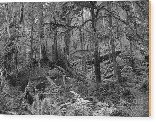 Olympic Rainforest Wood Print