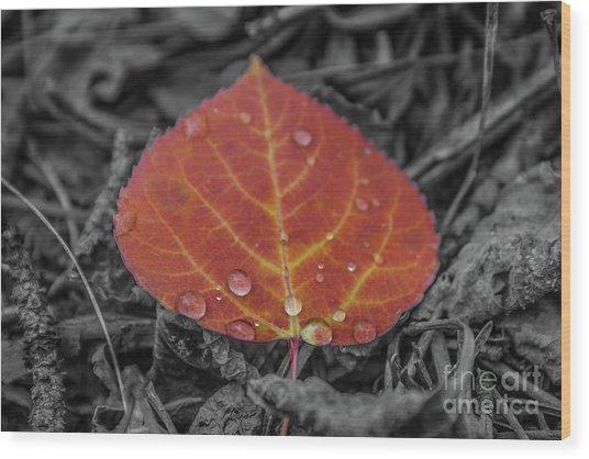 Orange Aspen Leaf Wood Print