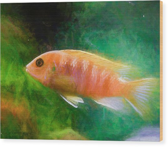 Orange Cichlid Chalk Smudge Wood Print