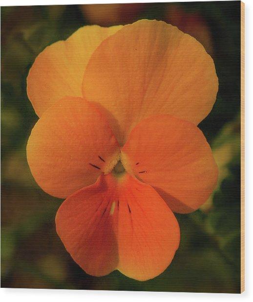 Orange Cream Wood Print