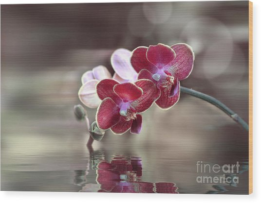 Orchid Reflection Wood Print
