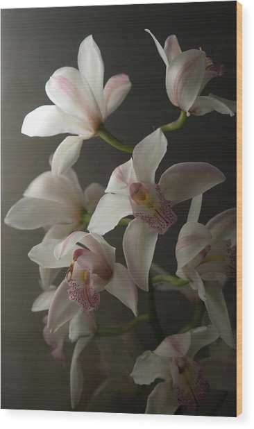 Orchids, Close-up Wood Print by Kate Connell