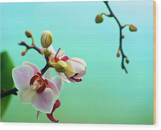 Orchids Out For A Breath Of Fresh Air Wood Print by Photo By Alan Shapiro