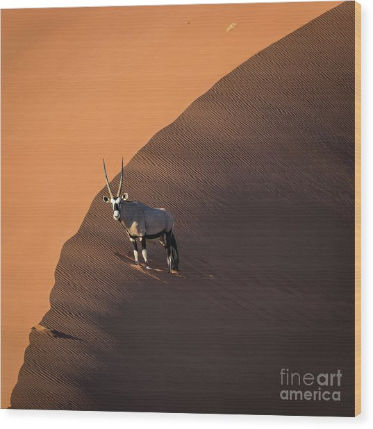 Oryx On The Edge, Namibia Wood Print