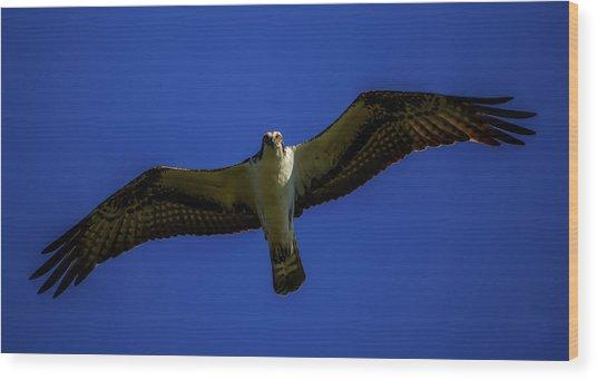 Osprey Glide In Blue Wood Print
