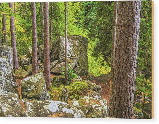 Ossian's Seat, The Hermitage, Perthshire Wood Print by David Ross