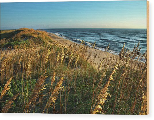 Outer Banks View Wood Print by Dan Carmichael