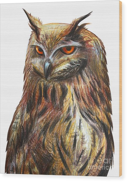 Owl Portrait Drawing Wood Print