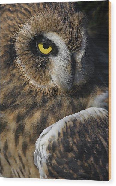 Owl Strikes A Pose Wood Print