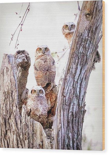 Owl Trio Standing Guard Wood Print
