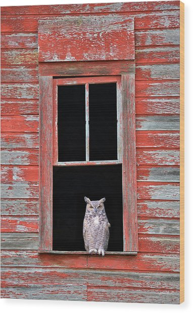 Owl Window Wood Print