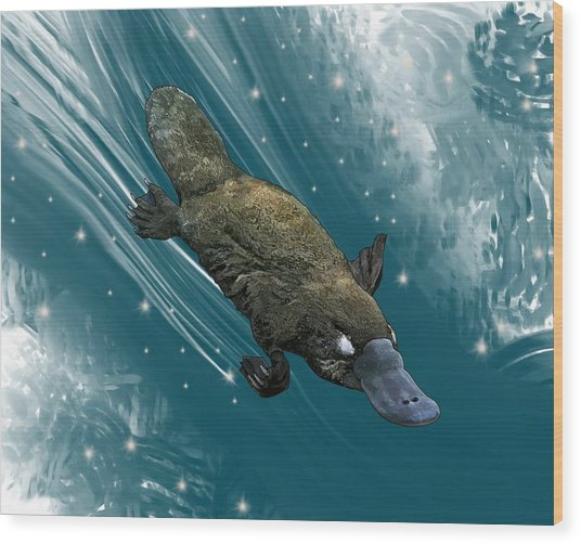P Is For Platypus Wood Print