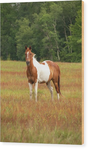 Paint Horse In Pasture Wood Print