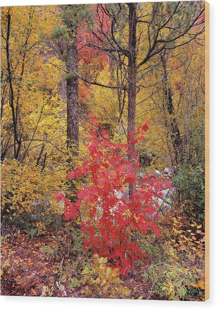 Painted Forest Wood Print by Leland D Howard