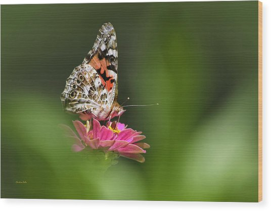 Wood Print featuring the photograph Painted Lady Butterfly At Rest by Christina Rollo