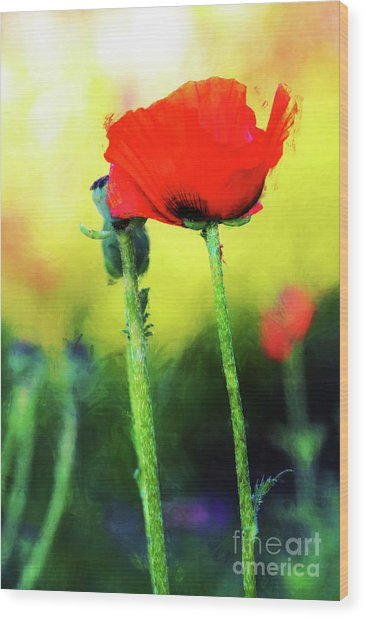 Painted Poppy Abstract Wood Print