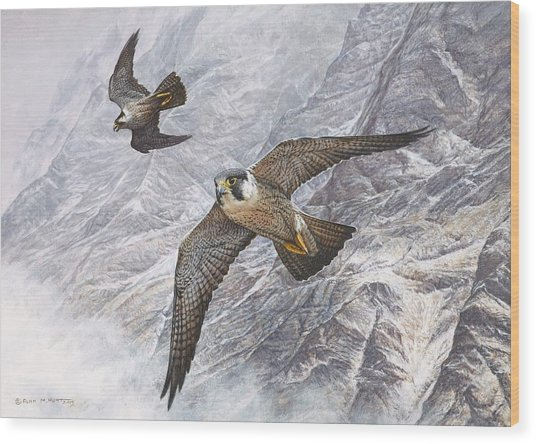 Pair Of Peregrine Falcons In Flight Wood Print