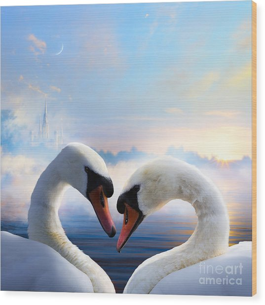 Pair Of Swans In Love Floating On The Wood Print