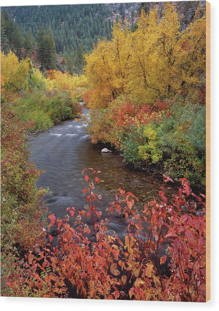 Palisades Creek Canyon Autumn Wood Print by Leland D Howard