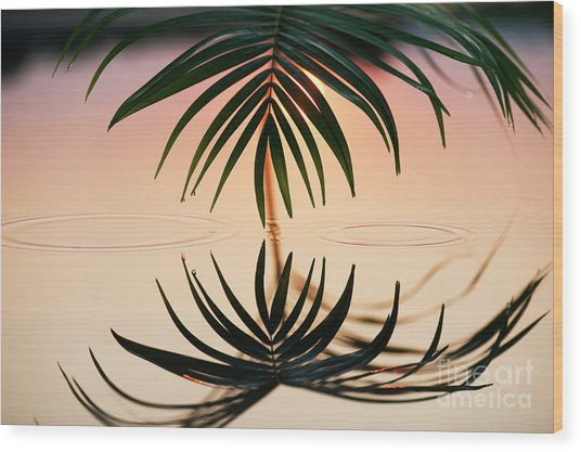 Palm Light Reflection Wood Print by Tim Gainey