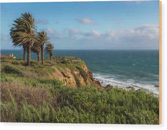 Palm Trees Blowing In The Wind Wood Print