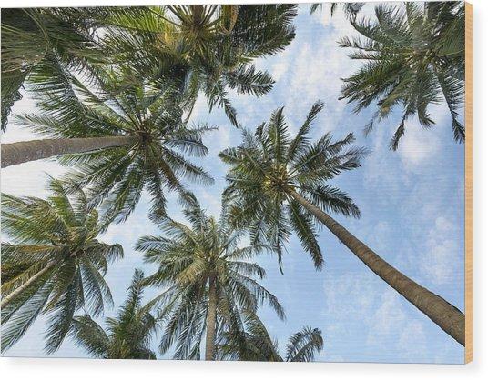 Palms  Beach Wood Print