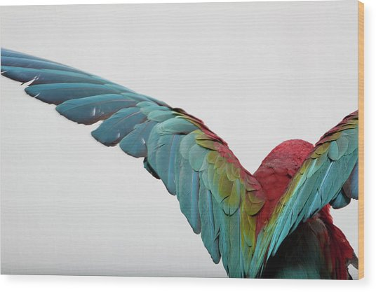 Parrot Wood Print by Zomi