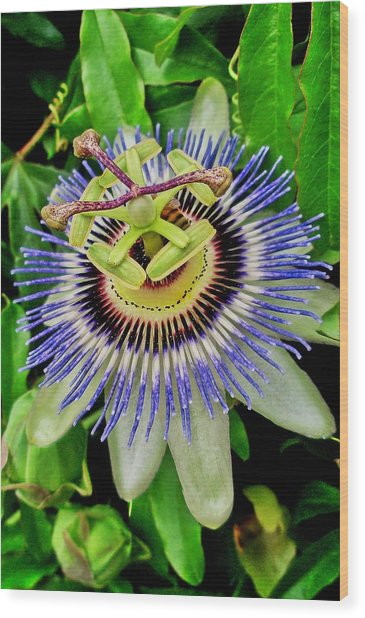 Passion Flower Bee Delight Wood Print