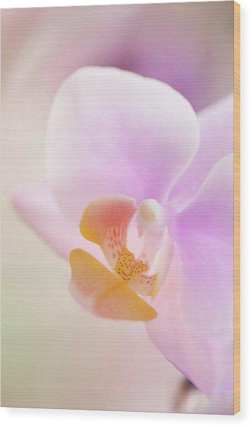 Pastel Pink Phalaenopsis Flower Close-up Wood Print by Maria Mosolova