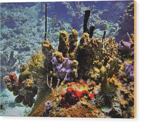 Patch Reef Bluff Wood Print