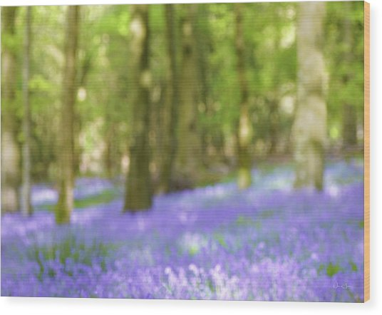 Pause Among The Bluebells Wood Print by Norma Slack