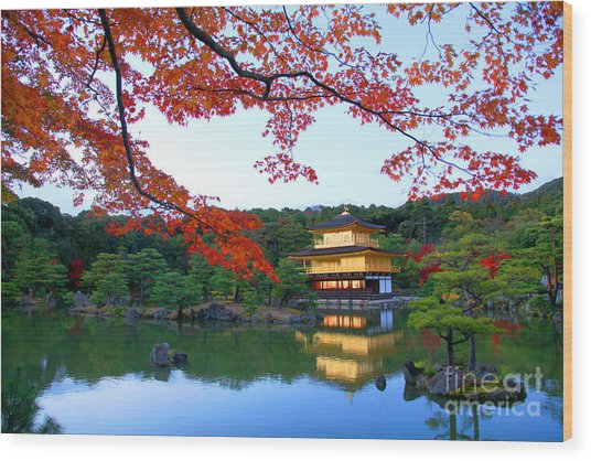 Peaceful Golden Pavilion Temple In Wood Print