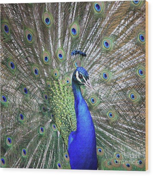 Peacock Portrait Wood Print