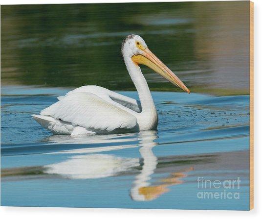 Pelican Reflected Wood Print