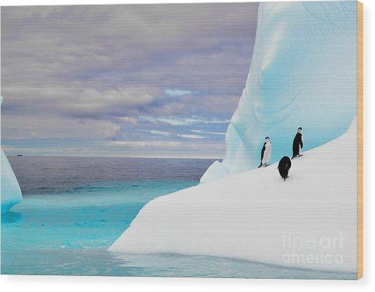 Penguins In Iceberg In Antarctica Pole Wood Print
