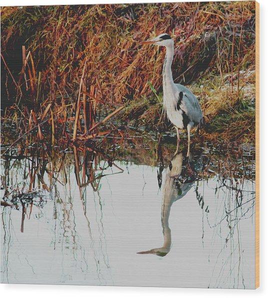 Pensive Heron Wood Print