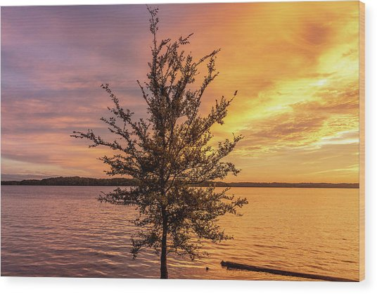 Percy Priest Lake Sunset Young Tree Wood Print