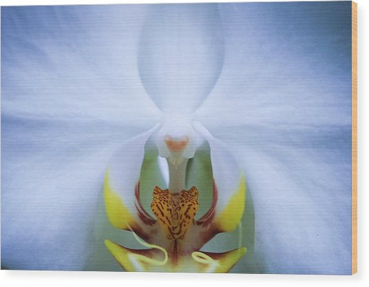 Phalaenopsis Orchid Wood Print by By Ken Ilio
