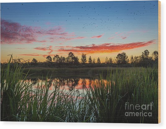 Phinizy Swamp Sunrise - Augusta Ga Wood Print