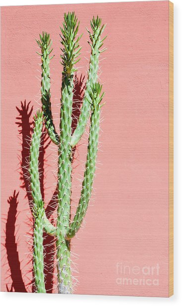 Photo Picture Of A Tropical Cactus Wood Print