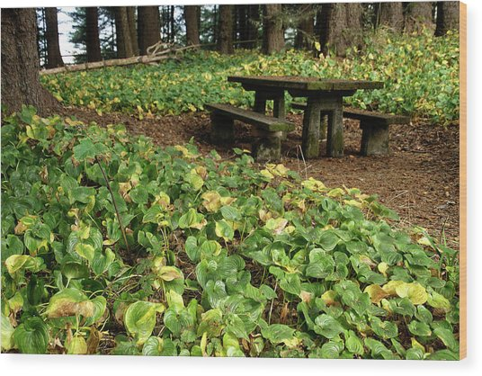 Picnic  Table In The Forest  Wood Print