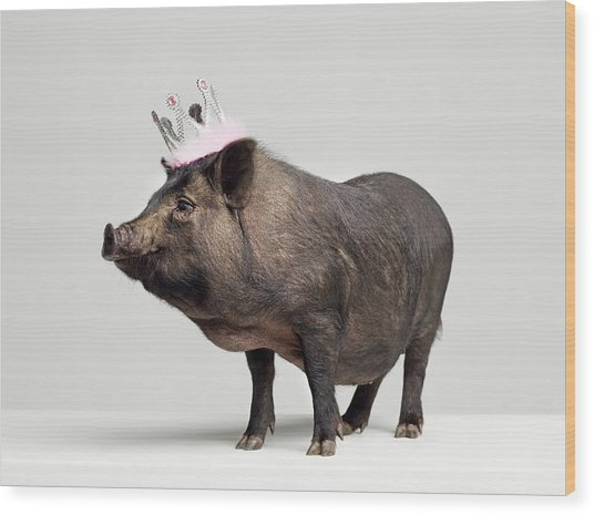 Pig With Toy Crown On Head, Studio Shot Wood Print by Roger Wright