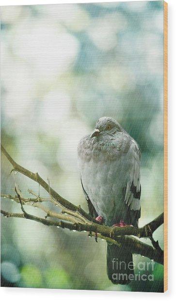 Pigeon Wood Print