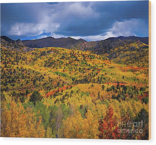 Pikes Peak Autumn Wood Print