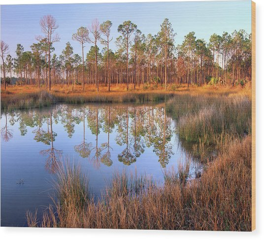 Pines Reflected In Pond Near Piney Wood Print by Tim Fitzharris/ Minden Pictures