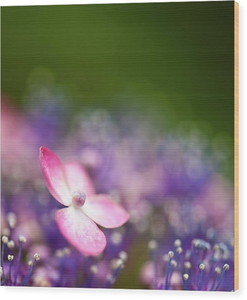 Pink And Purple Hydrangeas Wood Print by Nazra Zahri