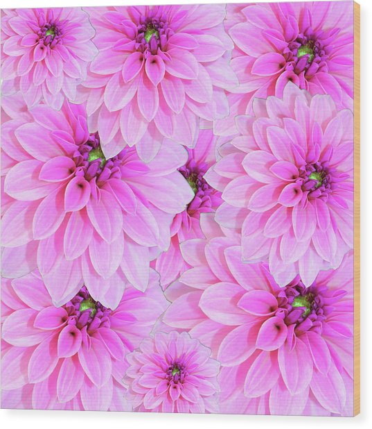 Pink Dahlia Flower Design Wood Print