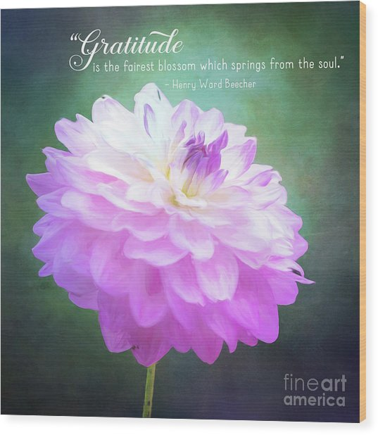 Pink Dahlia Gratitude Artwork Wood Print