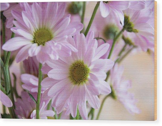 Pink Daisies-1 Wood Print